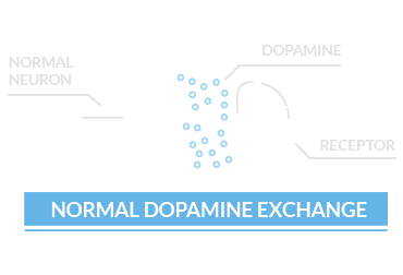 normal dopamine exchange