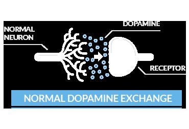 normal dopamine exchange
